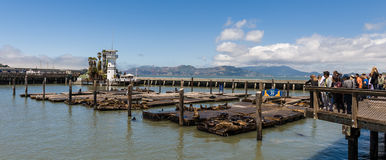 Panorama of Pier 39 in San Francisco Stock Photography