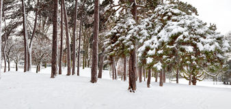 Panorama. Pierwszy śnieg w parku. Obrazy Royalty Free