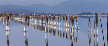 Panorama of pilings in river. Royalty Free Stock Photography