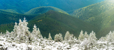 Panorama of pine trees in snow mountains Stock Photos