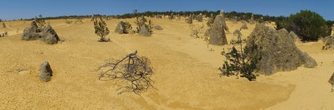 Panorama of Pinnacles Desert, Nambung National Park, West Australia Stock Photography