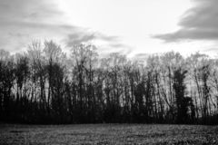 Panorama piovoso che cammina nel cespuglio in bianco e nero illustrazione vettoriale