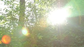 Panorama, play of sun through new fresh green leaves. Solar glare in the lens. Beautiful spring nature scene stock video