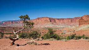 Panorama point of Capitol Reef Royalty Free Stock Photo