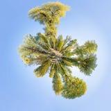 panorama polaire de parc de 360 degrés Image stock
