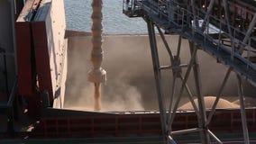 Panorama próximo de colheitas de grão da carga do navio no cargueiro maioria através do tronco para abrir posses da carga no term video estoque