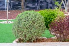 Panorama que ajardina natural en jard?n Hermosa vista del jard?n ajardinado en patio trasero fotografía de archivo libre de regalías