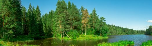 Quiet river in the forest Royalty Free Stock Image
