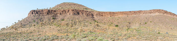 Panorama of the Quiver Tree Forest at Gannabos near Nieuwoudtvil Royalty Free Stock Images