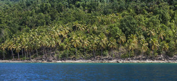 Panorama of rain forest and beach Royalty Free Stock Photo