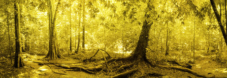 Panorama of rainforest Stock Photography
