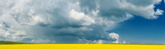 Panorama of rape field Royalty Free Stock Photography