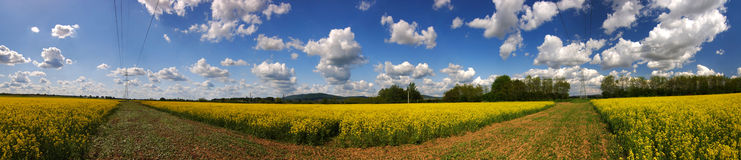 Panorama rapefield Stock Photos