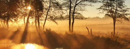 Panorama rays of the rising sun. At sunrise Stock Photography