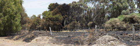 Panorama  recent bushfire  along estuary. Stock Photos