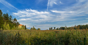 Panorama in the reeds. Reed bed in Italy, Verbania Lake Maggiore stock photography