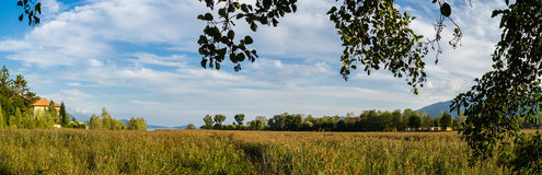 Panorama in the reeds. Reed bed in Italy, Verbania Lake Maggiore royalty free stock images