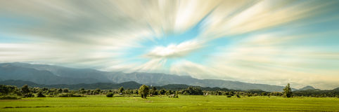 Panorama of Rice Farm Royalty Free Stock Photos