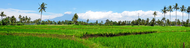 Panorama from rice field landscape on Java island, Indonesia Royalty Free Stock Photo