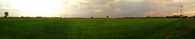 Panorama of rice fields, lush green areas. stock image