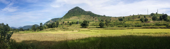 Panorama of rice paddies Royalty Free Stock Photo
