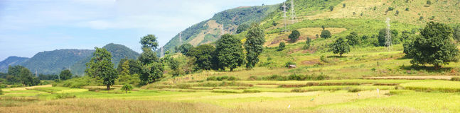 Panorama of rice paddies Stock Photography