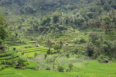 Panorama rice terraces. In Bali, Indonesia Stock Photos