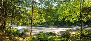 Panorama of a river in the forest Stock Image