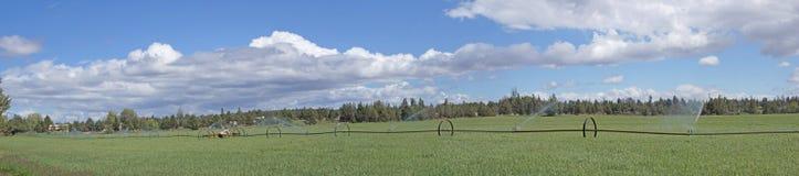 Panorama, rociadores automotores de la irrigación Foto de archivo libre de regalías