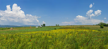 Panorama of romanian farm field with flowers Stock Images