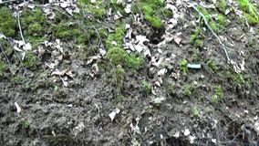 Panorama from the roots of a tree on the bank of the river up to the trees. Video using the pristine HD Steadicam. Panorama from the roots of a tree on the Bank stock video