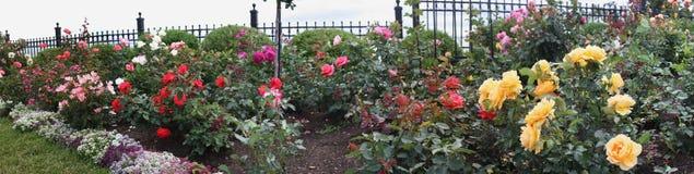 Panorama Rose Garden Fotografia Stock