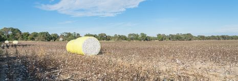 Close-up cotton bales on harvested field in Texas, USA. Panorama row of round bales of harvested fluffy cotton wrapped in yellow plastic under cloud blue sky royalty free stock photos