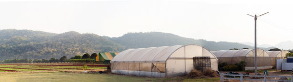 Panorama rural agriculture farm Royalty Free Stock Images