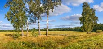 Panorama rural de paysage d'automne, champ, forêt, ciel bleu et whi photo libre de droits