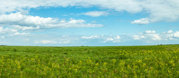 Panorama rural field in summer, Royalty Free Stock Photo