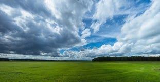 Panorama rural field in summer, Stock Image