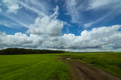 Panorama rural field in summer, Royalty Free Stock Photos