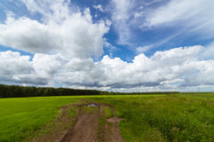 Panorama rural field in summer, Stock Photos
