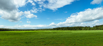 Panorama rural field in summer, Stock Photography