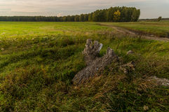 Panorama rural field in summer, Stock Images