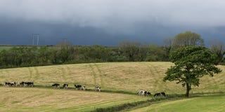 Panorama rurale scenico del terreno coltivabile dell'Irlanda Fotografia Stock