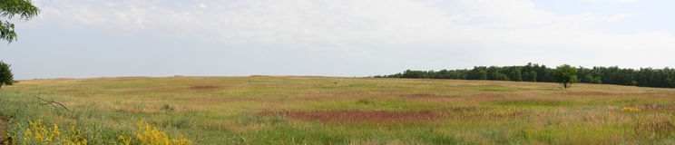 Panorama of the Russian plain. Stitched Panorama. Meadow on a Sunny summer day Royalty Free Stock Photo