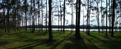 panorama- sörja trees Arkivfoto