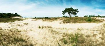 Panorama of sand-dunes Royalty Free Stock Photo