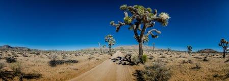 Panorama of Sandy Desert Road with Joshua Trees Stock Image