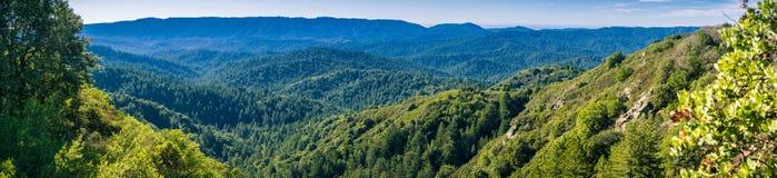 Panorama in Santa Cruz-bergen met altijdgroene bossen die heuvels en valleien behandelen zoals die van het Park van de Staat van  stock fotografie