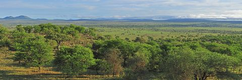 Panorama Savanna Royalty Free Stock Images