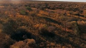 Panorama of the savannah of Namibia and the sky at sunset. stock video footage