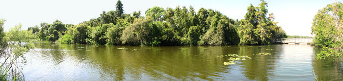 Panorama of Sawgrass lake. In Florida, showing reflection of trees in water royalty free stock photos